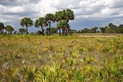 Subtropisch Landschap Stock Afbeelding