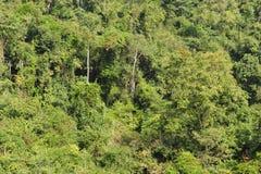 Subtropisch Regenwoud stock afbeelding
