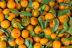 Subtropische Frucht Stockbild