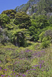 Subtropische vegetatie dichtbij Kathedraalinham Royalty-vrije Stock Foto