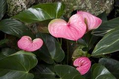 Subtropischer Garten blüht Anlagen Lizenzfreie Stockfotos