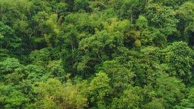 Subtropischer Wald in Bali Stockfotografie