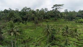 Subtropisk skog i Bali Arkivbilder