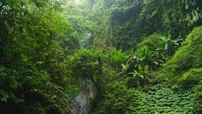 Subtropisk skog i Bali Arkivfoto