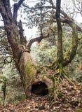 Subtropisk skog i Nepal Arkivfoto