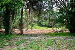 Subtropisk vildmark i florida Arkivfoto
