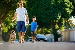 Suburb dad dog Stock Image