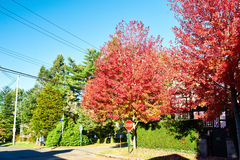 Suburban neighborhood in autumn Stock Photos