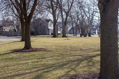 Suburban park setting with trees stock images