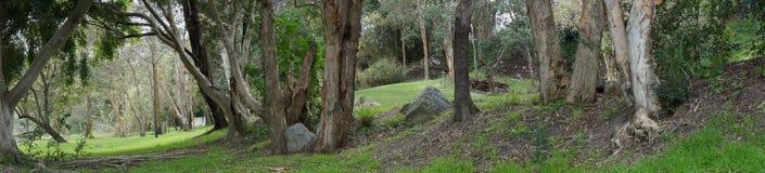 Suburban parkland grove. Trees, rocks grass and shadows of urban parkland grove in Brisbane Australia Royalty Free Stock Photos