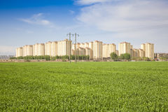 Suburb of wheat Royalty Free Stock Photo