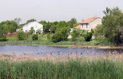 Suburban Scene. Colorful suburban home scene with geese and wild glass Stock Photo