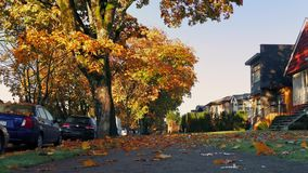 Suburbs In The Fall With Leaves Covering Ground stock video footage