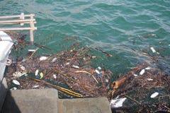 Sucata que flutua no porto Fotografia de Stock Royalty Free
