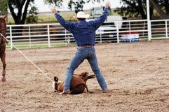 Success. Calf roping action at a rodeo Stock Photo