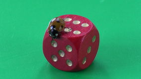 Success concept – ladybug ladybird on red dice number six stock footage