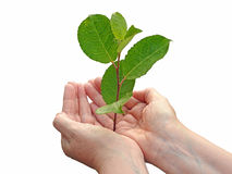 Success growth concept stock photo
