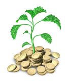 Success New growth. Small plant growing from gold coins isolated on white royalty free illustration