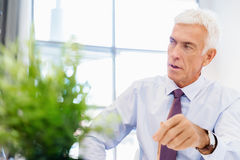 Success and professionalism in person. Businessman standing in office smiling at camera royalty free stock photo