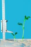 Successen in de groei Stock Fotografie