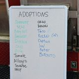 Successful Adoptions for Nashville Cat Rescue at Oktoberfest Event. Adoption board shows 19 adoptions for Nashville Cat Rescue during Oktoberfest, with one day stock photography