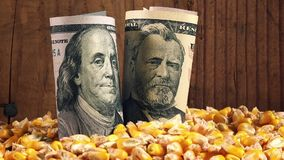 Successful agricultural production, making profit after harvesting corn in America stock video