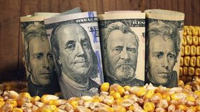 Successful agricultural production, making profit after harvesting corn in America stock video footage