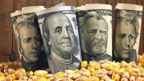 Successful agricultural production, making profit after harvesting corn in America stock footage