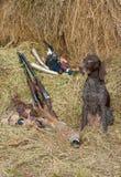 Successful bird shoot Royalty Free Stock Photography