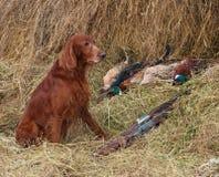 Successful bird shoot Royalty Free Stock Photo