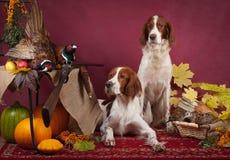 Successful bird shoot, studio Stock Images