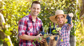 Successful couple winegrower Stock Photo