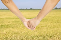 Successful farmers hold their hands Royalty Free Stock Photos