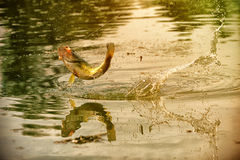 Free Successful Fishing Moment Royalty Free Stock Photos - 40570738