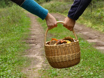 Successful mushrooming. Couple carrying full basket with mushrooms Stock Photos