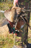 Successful pheasant hunters. A hunting guide with three pheasants on the West Coast, South Island, New Zealand Royalty Free Stock Photo