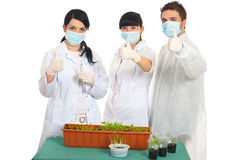 Successful scientists people in laboratory. With new vegetables plants on their table giving thumbs up Stock Photos