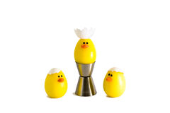 Successful yellow duck. S in form of egg with crown of shell isolated Royalty Free Stock Photo