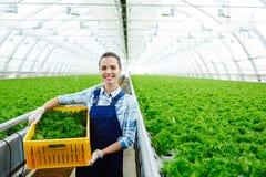 Agribusiness Royalty Free Stock Photos