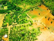 Successie of aantasting van boom in een opheldering royalty-vrije stock afbeelding