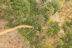 Successie of aantasting van boom in een opheldering stock afbeelding