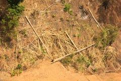 Successie of aantasting van boom in een opheldering stock foto