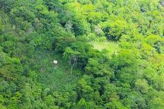 Successie of aantasting van boom in een opheldering stock afbeeldingen