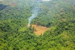 Successie of aantasting van boom in een opheldering stock fotografie