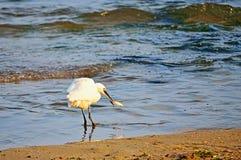 Succesvolle dag van de jacht op het strand Royalty-vrije Stock Afbeeldingen