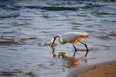 Succesvolle dag van visserij op het strand Royalty-vrije Stock Afbeelding