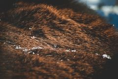 Succesvolle elandenjacht stock foto