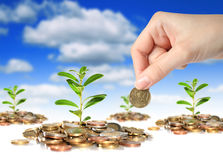 Succesvolle handelsinvesteringen. Royalty-vrije Stock Foto