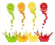 Succo di limone, arancia, calce, pompelmo su fondo bianco Immagine Stock Libera da Diritti