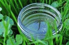Succo verde sano e delizioso fotografia stock